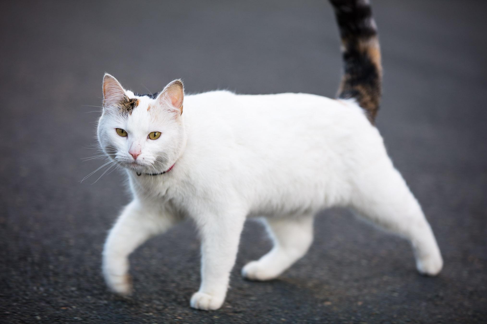 cat in town two.jpg