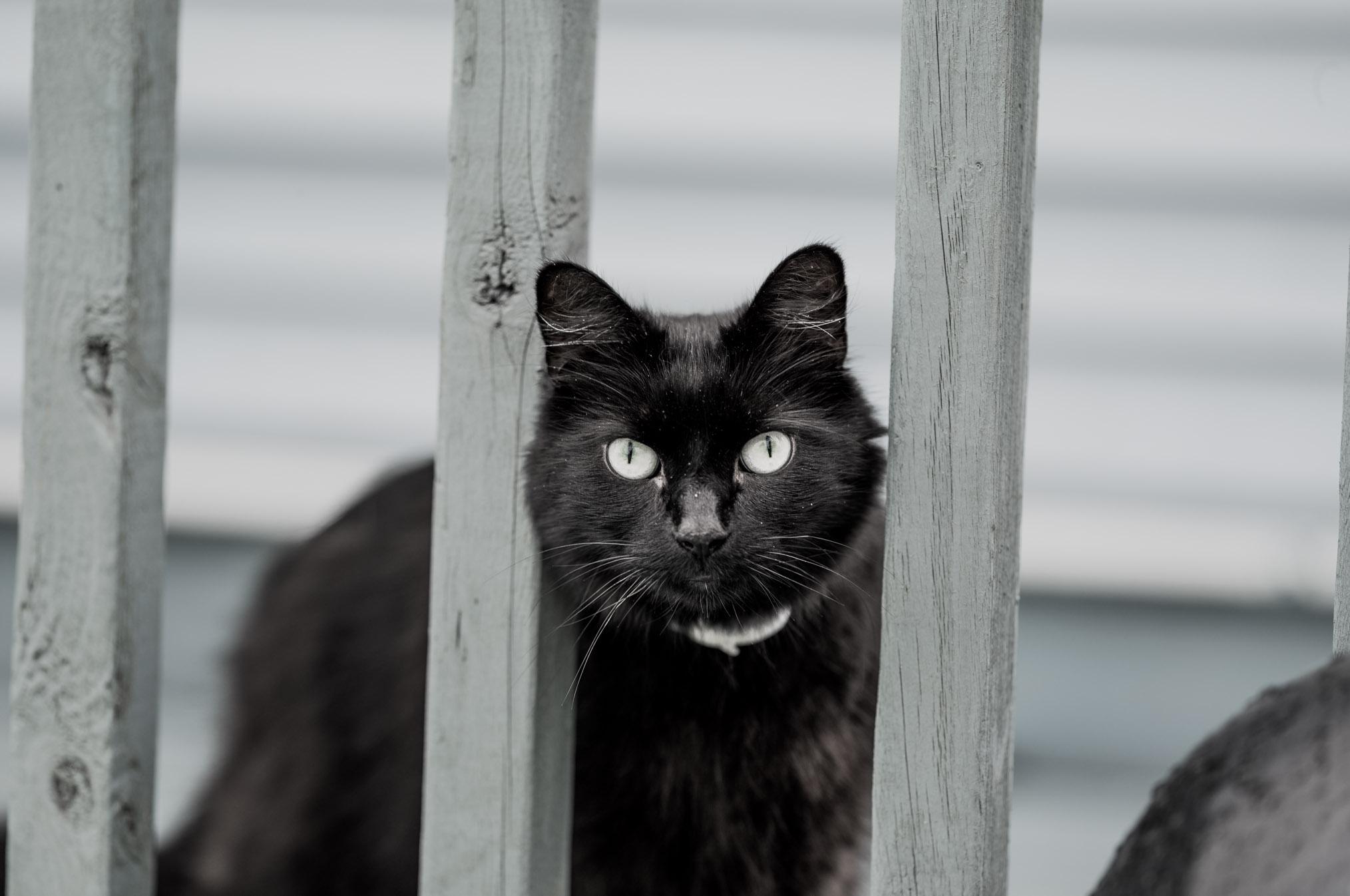digby cat.jpg