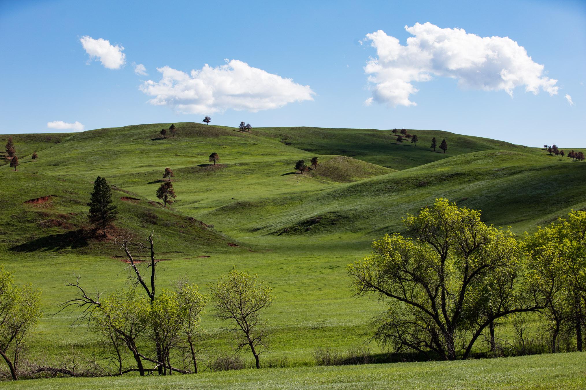 custer state park.jpg