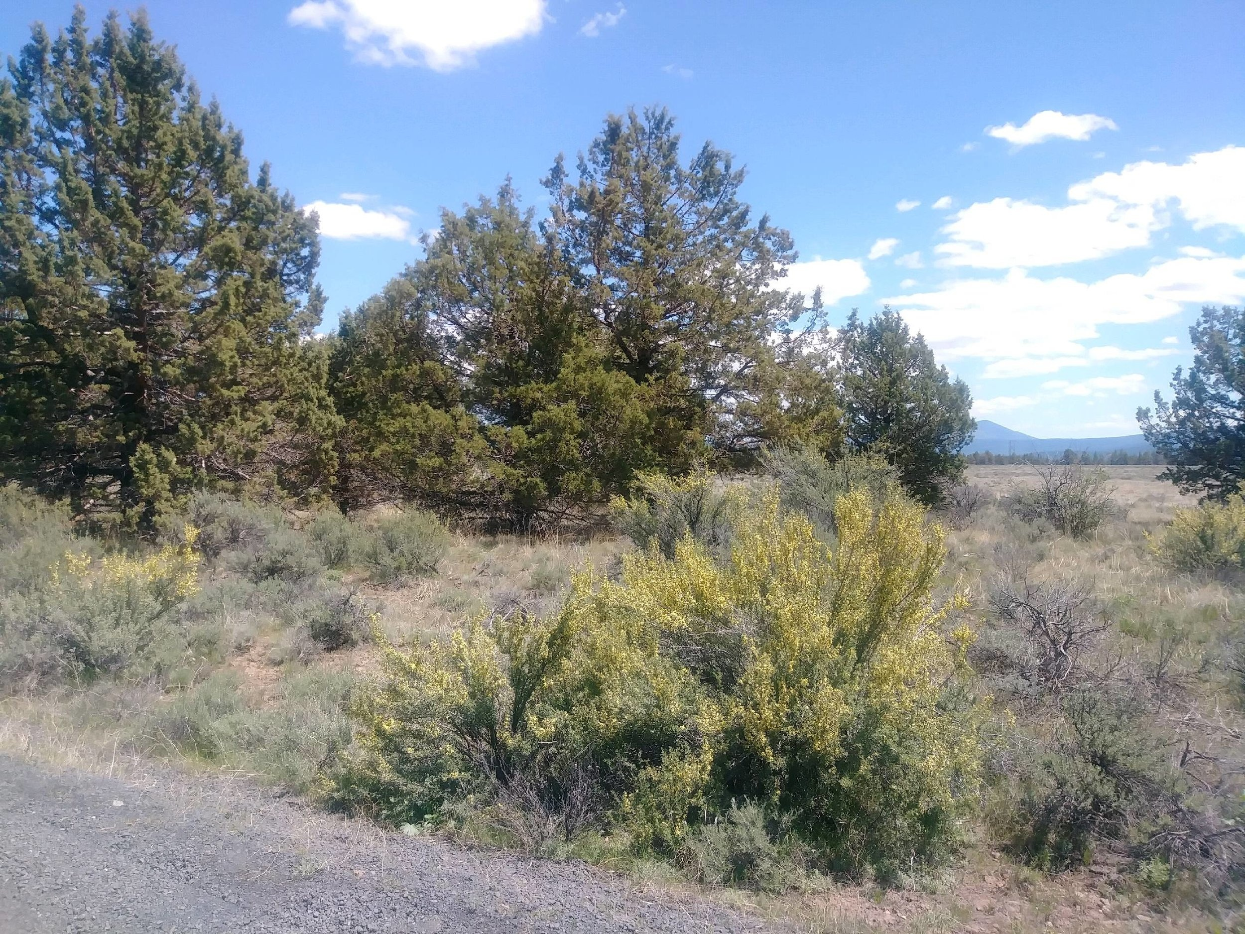 1.52 Acre Lot Sold in Nimrod River Park OR