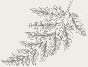 leaf_3.png