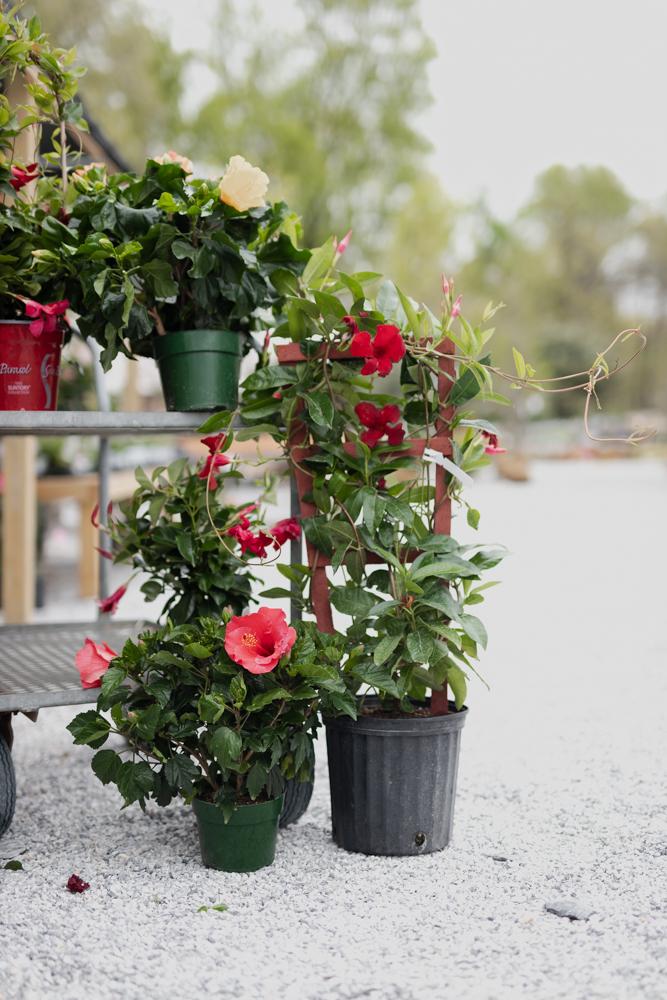 garden_greenhouse_york_pa-15.jpg