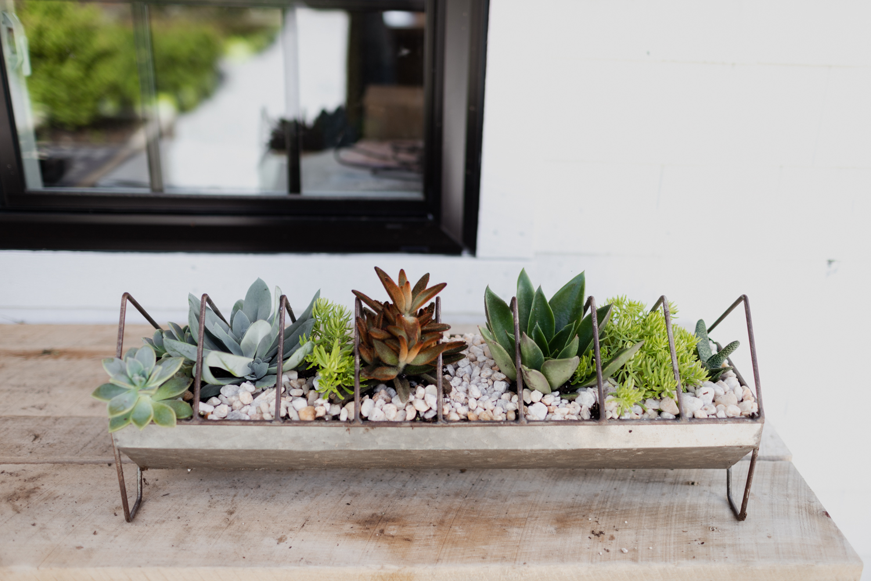 plants-6.jpg