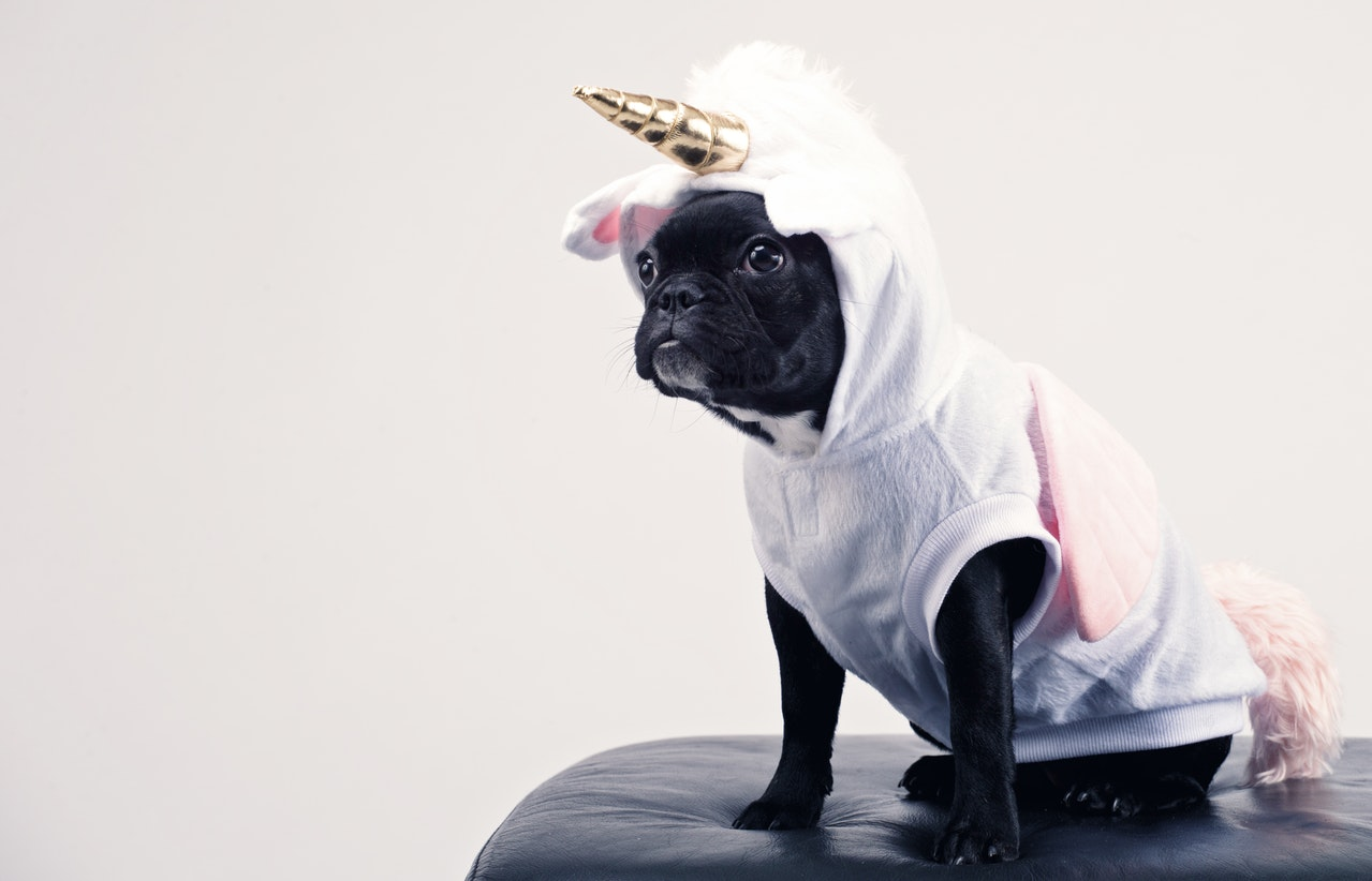 adorable-animal-canine-1564506.jpg
