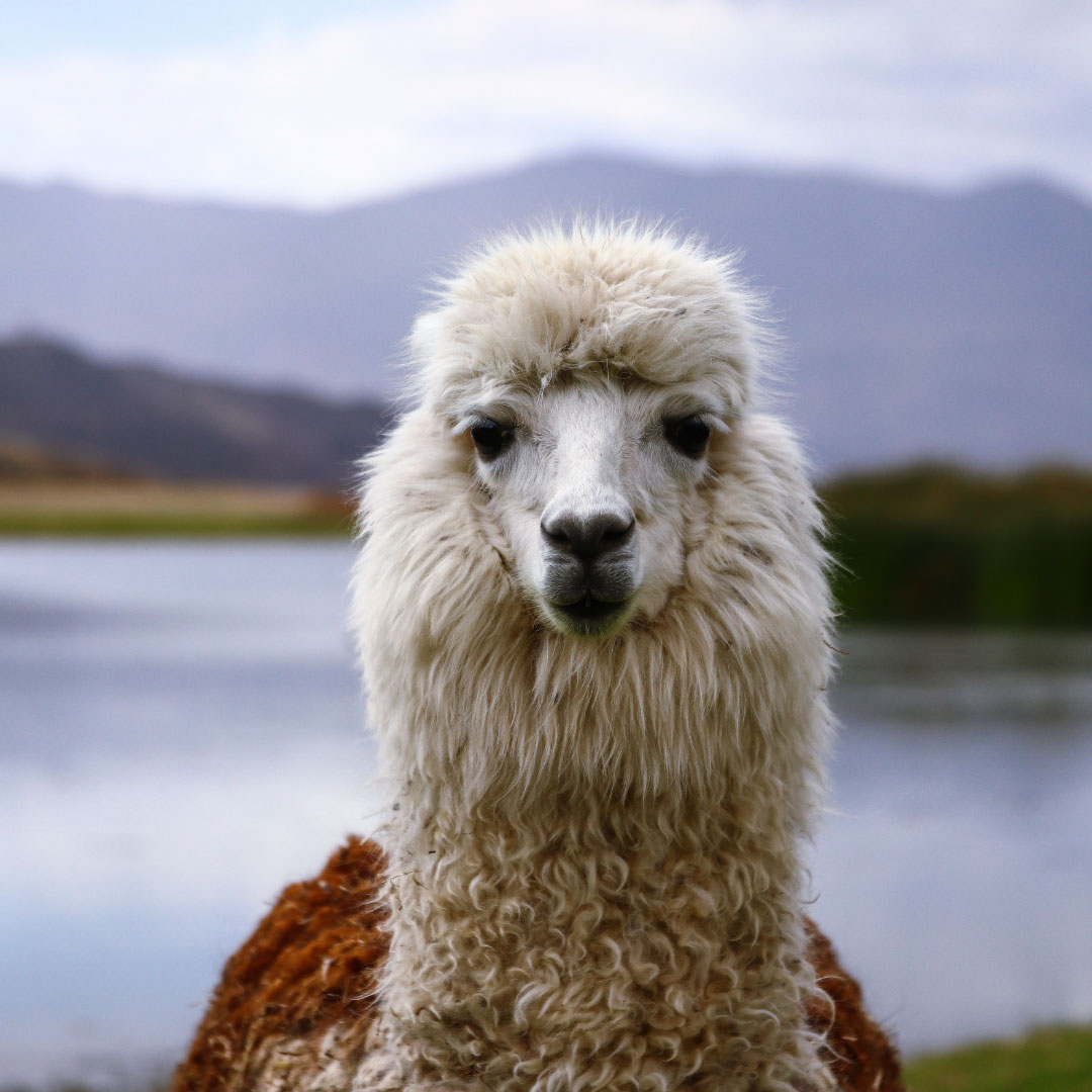 PERU - Peru is a diverse, beautiful, and magical country. On this itinerary we will explore some of the less-traveled areas of the Northern Highlands.