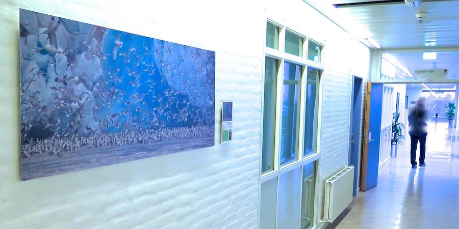 Inviter naturen indenfor med unikke billeder. Velegnet til kontor, institutioner, sygehuse og som vægkunst til din bolig. -