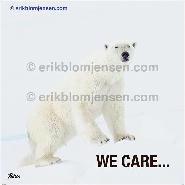 Nr. 6: Isbjørn - We care - Akustikplade med sort træramme.  103x103 cm. Pris oplyses på forespørgsel.