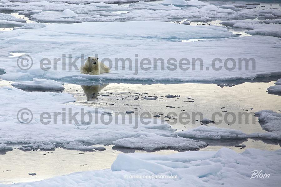 Nr. 8: Isbjørnetanker - Fine art under glas og i sort træramme. 90x60 cm. Pris oplyses på forespørgsel.