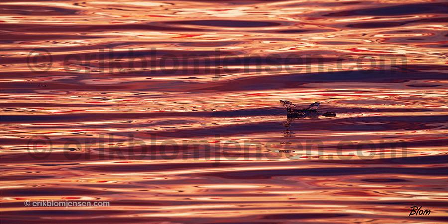 Nr.14: Is - Isfugl i solopgang - Panorama på lydforbedrende plade.  120x60 cm. Pris oplyses på forespørgsel.