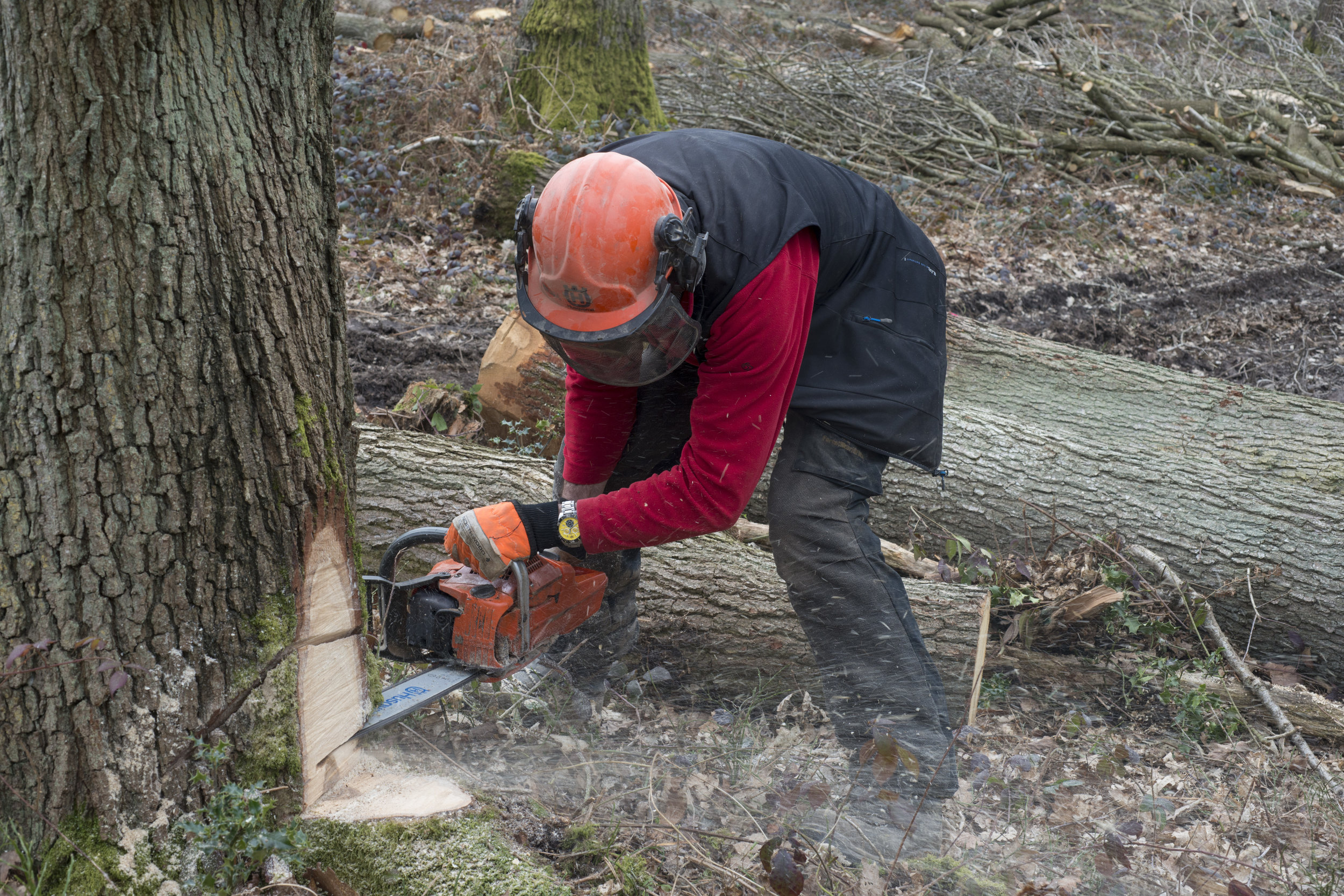 henk felling our tree.jpg
