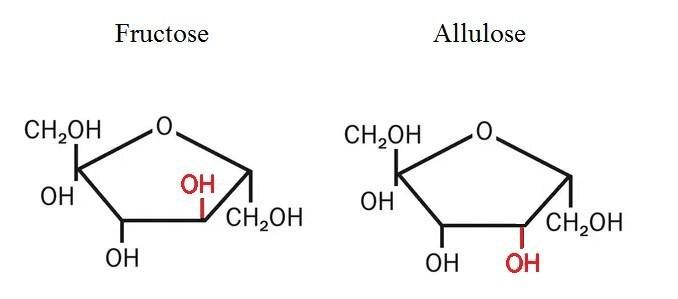 allulose vs fructose.jpg