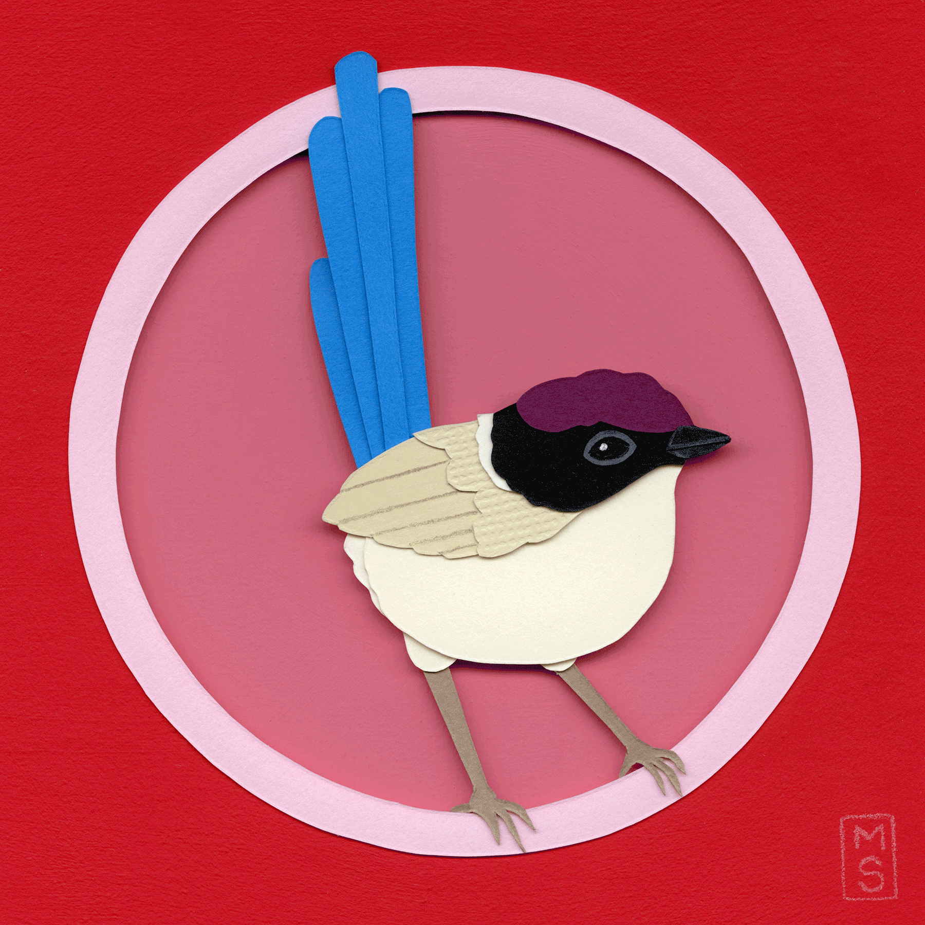 """Purple-Crowned Fairywren"""