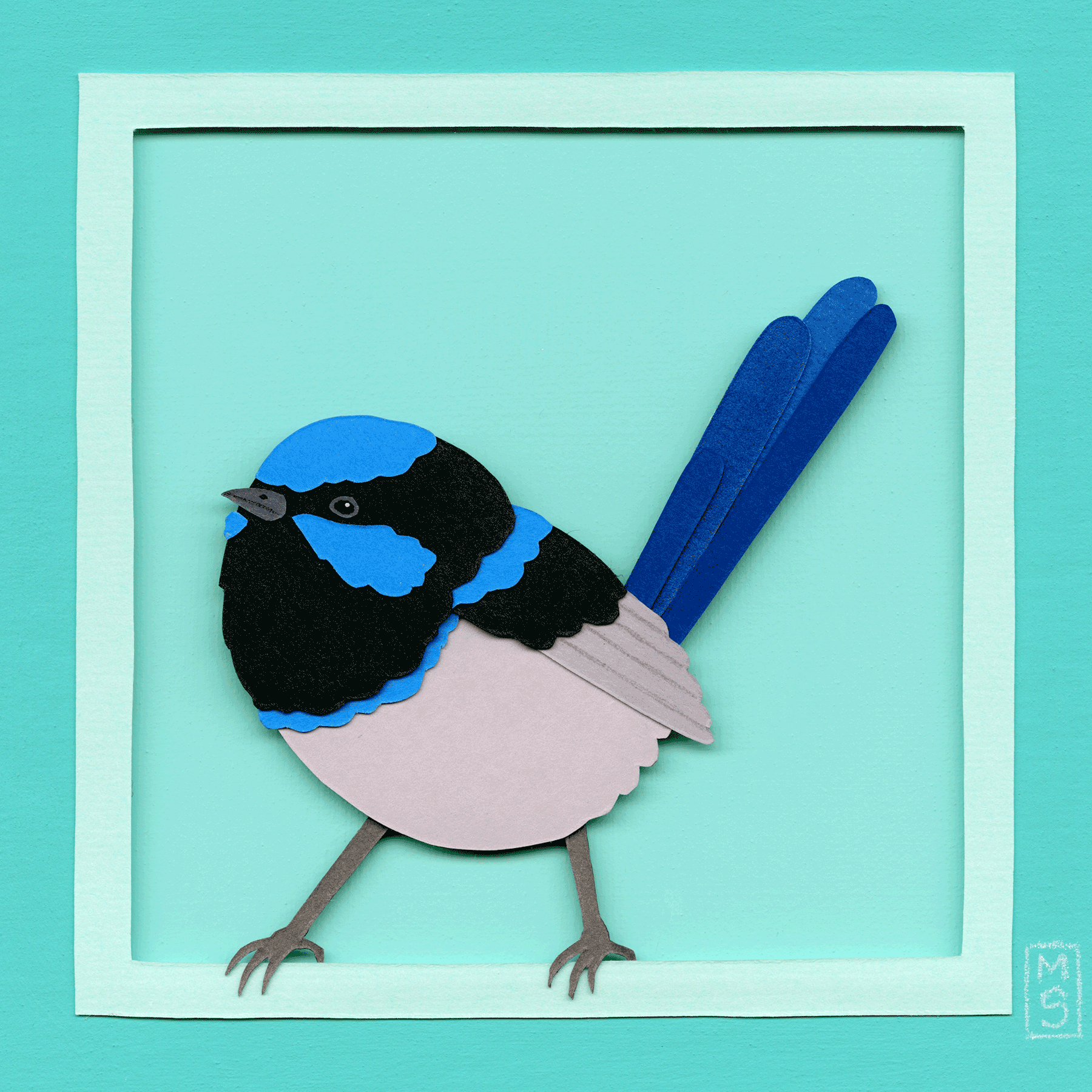 """Superb Fairywren"""