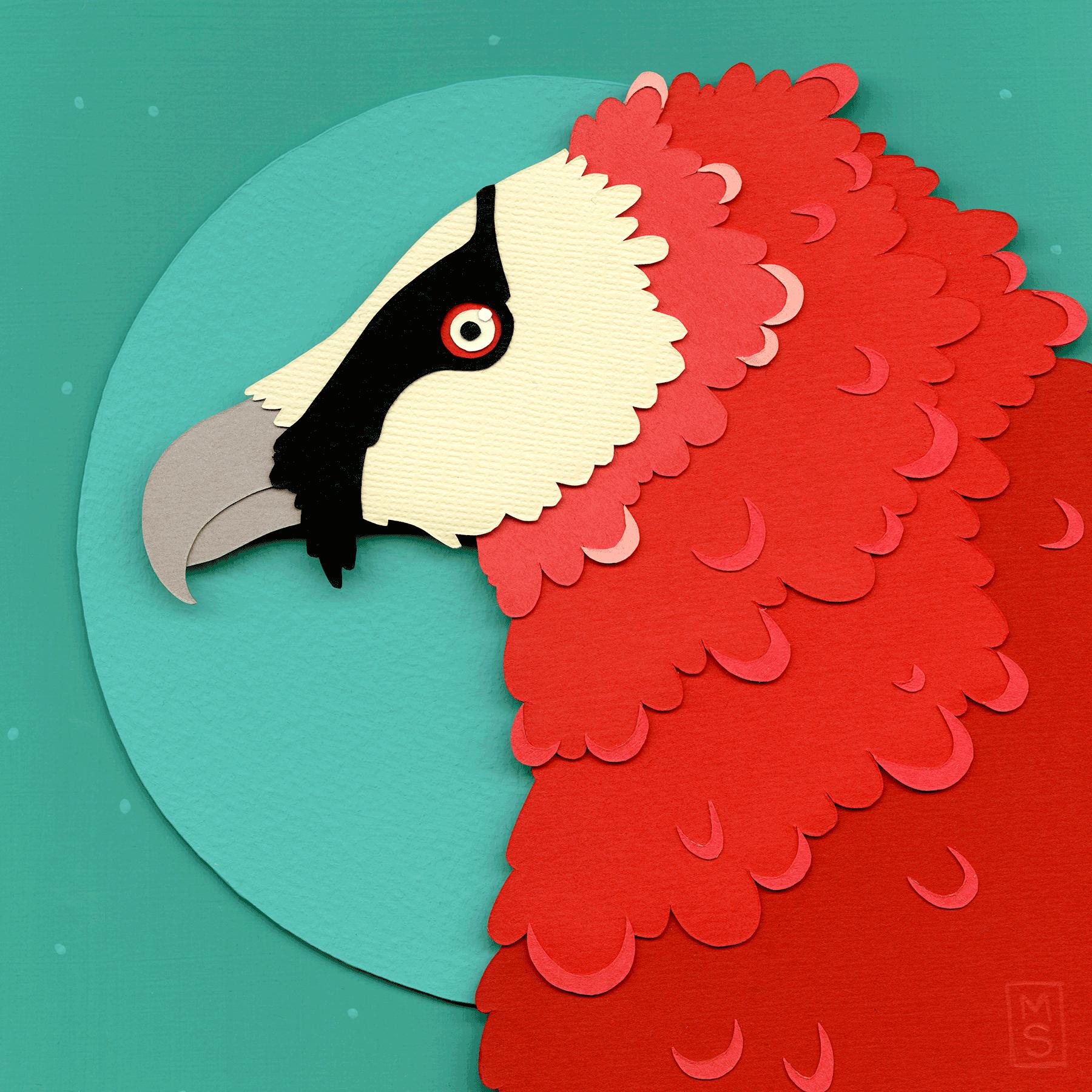 Vulture_sRGB.png
