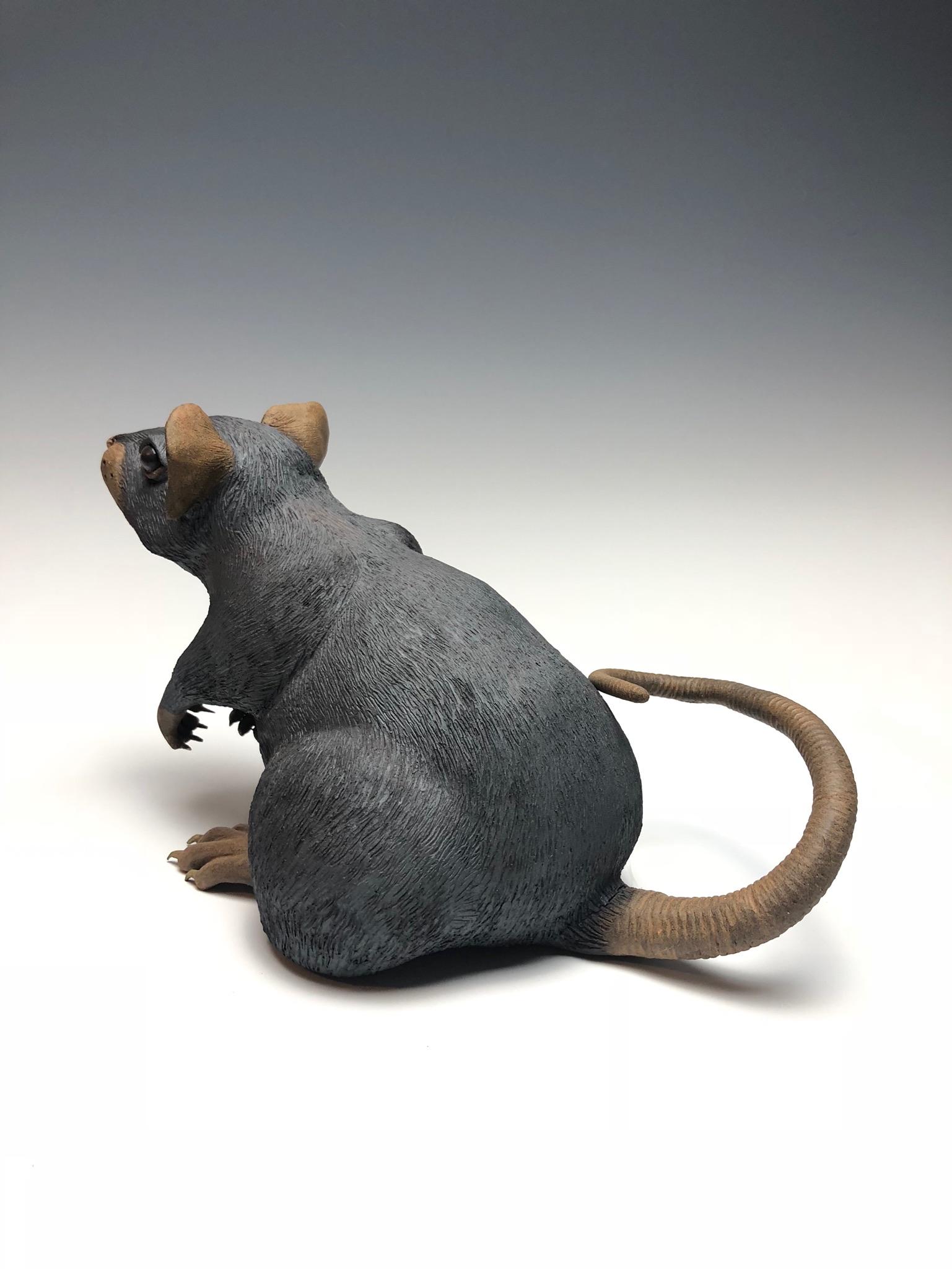 Rat 6.JPG