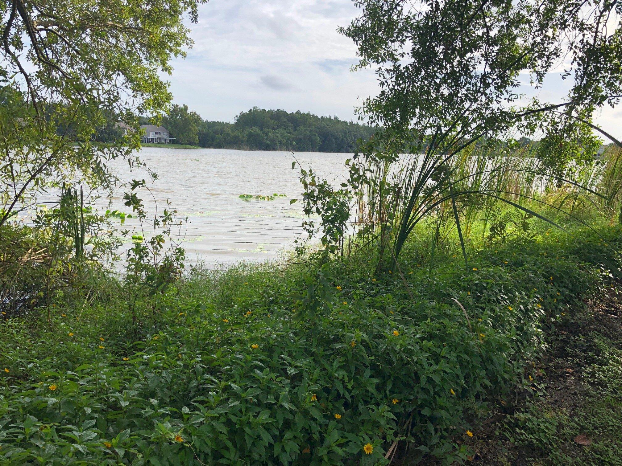 Alexa Lake.jpeg