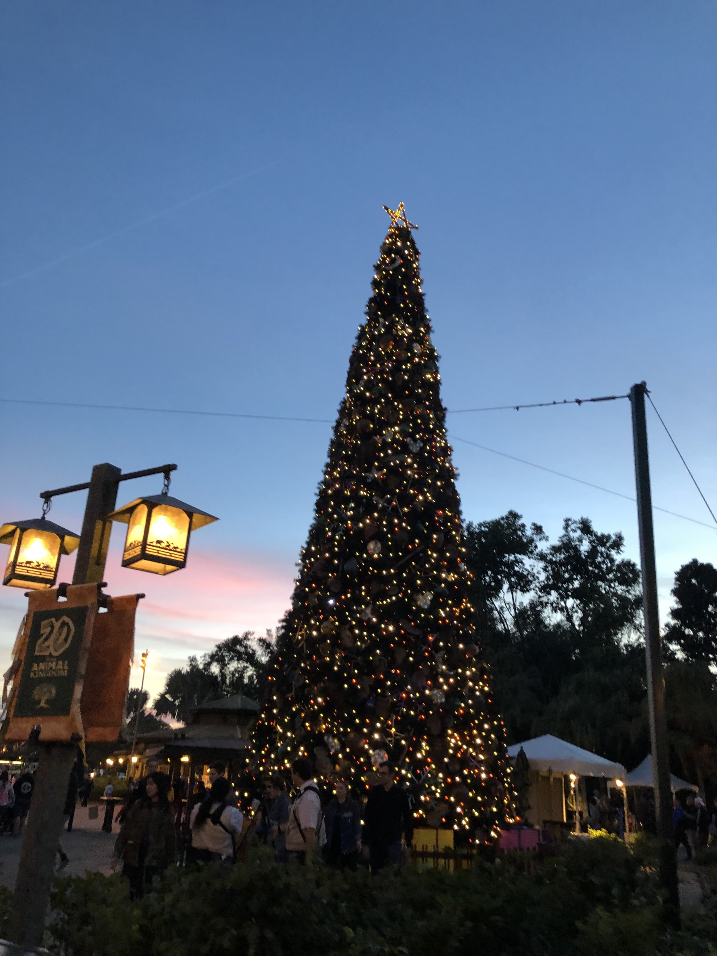 Animal Kingdom's 2018 Christmas Tree - celebrating 20 years!