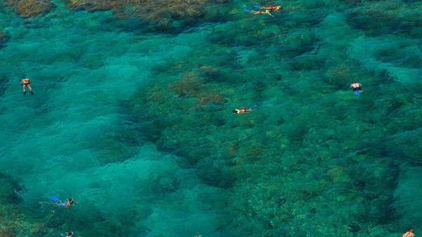 snorkel-key-west-5-1300x731.jpg