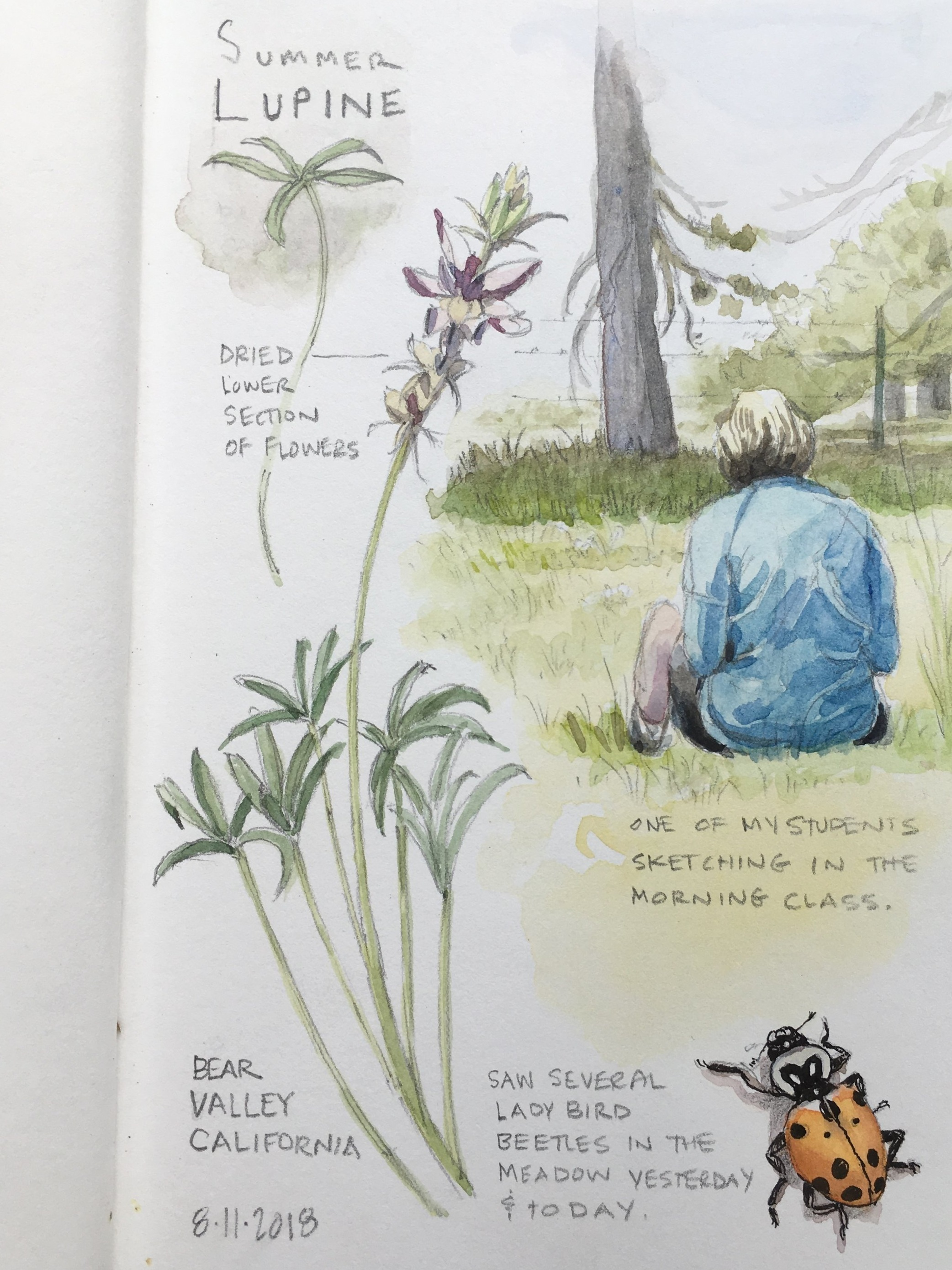 Creating an Illustrated Field Journal -