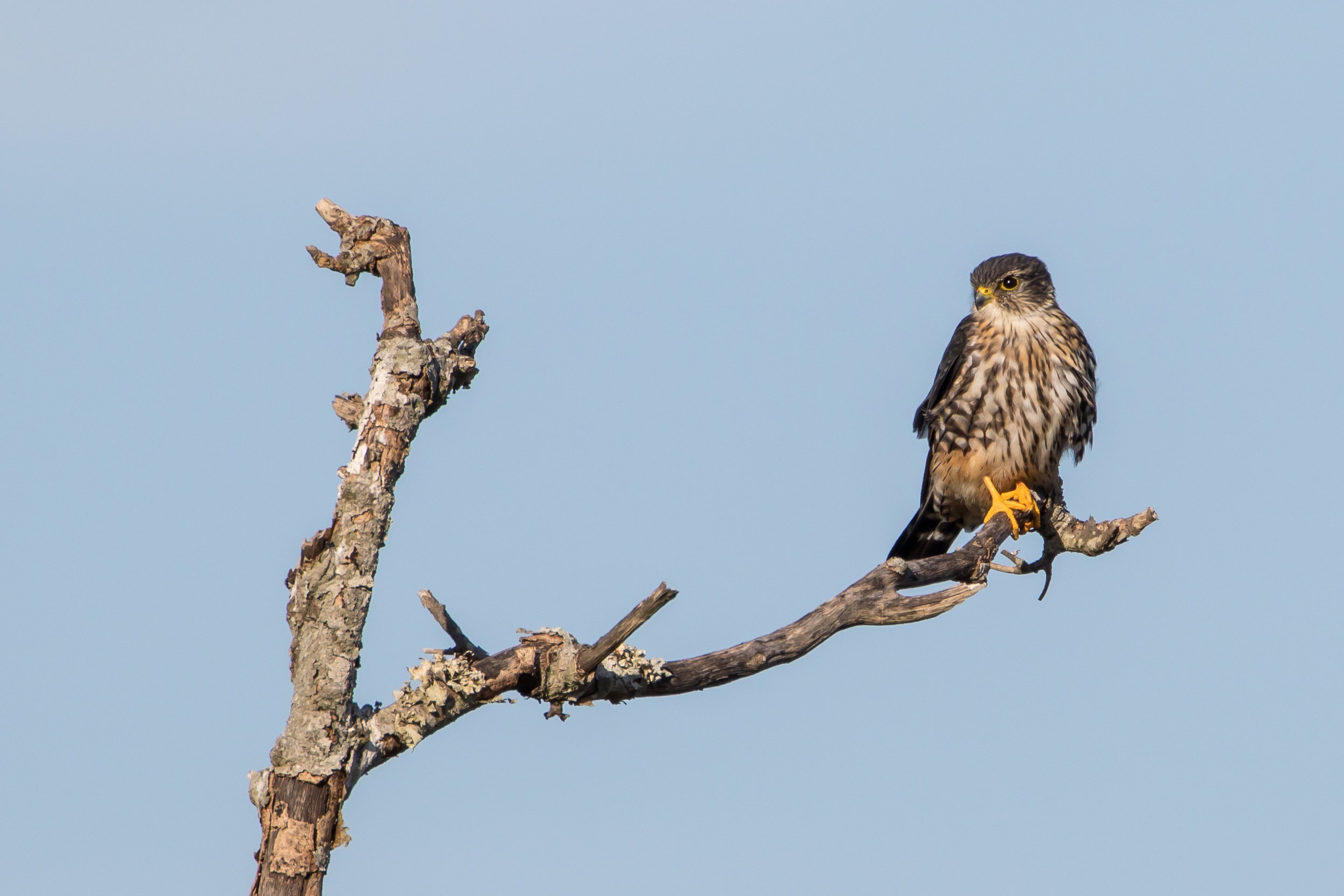 octbirds (14 of 20).jpg