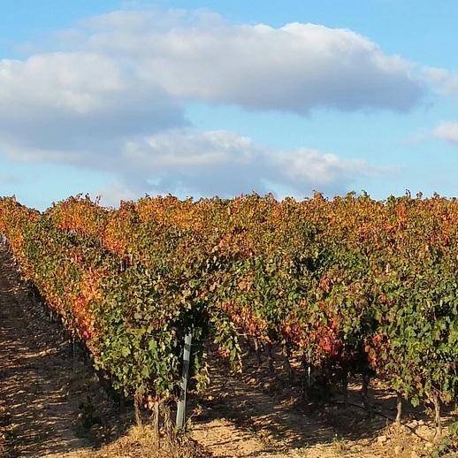 Auxiliares de Conversación Facebook Group: La Rioja
