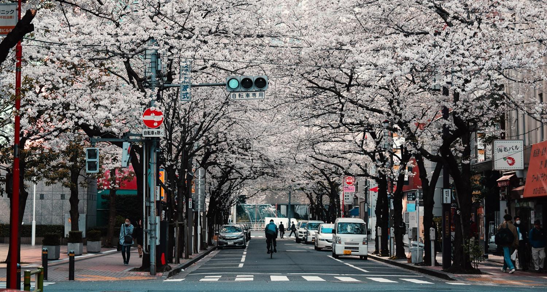Dream-Maker-Travel-Japan-Cherry-Blossom-Header-Banner.jpg