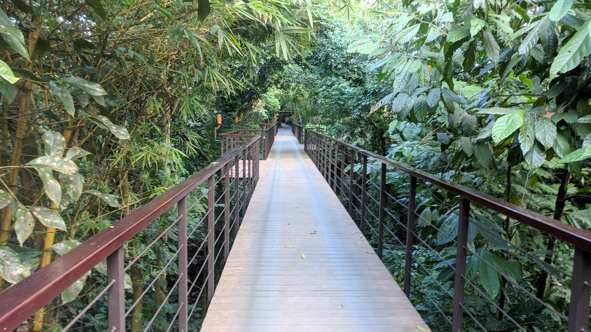 A bridge connected Nayara Springs with it's sister property.