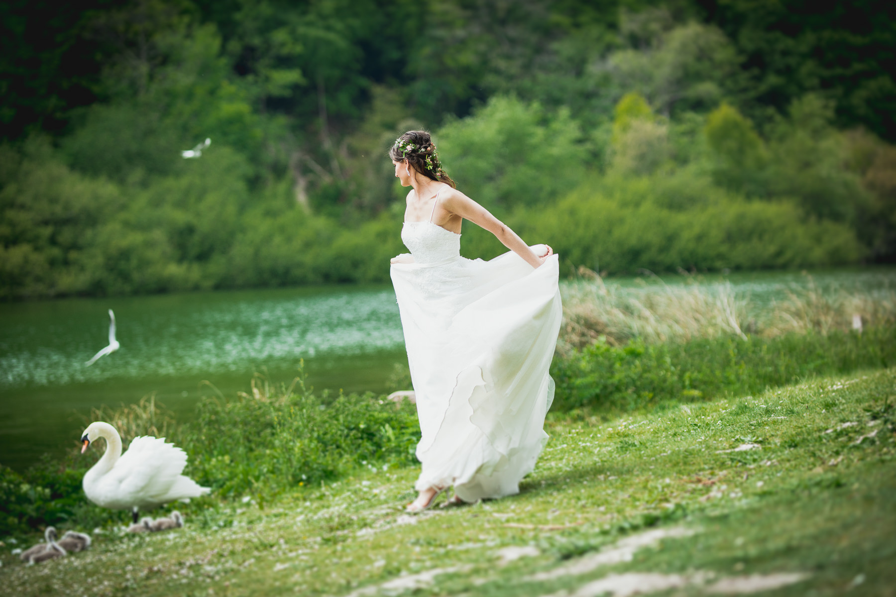 Bride and Swan Dance near the pond Vilcinskaite Photo
