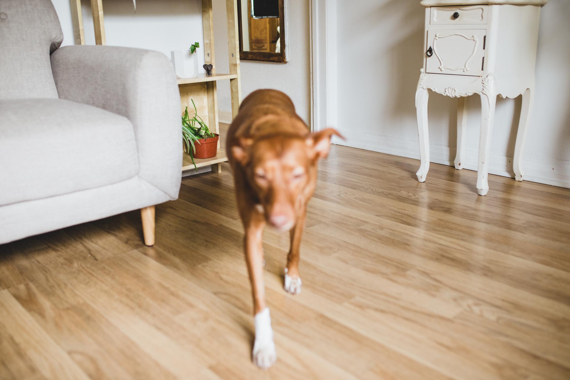 Lovely Dog posing