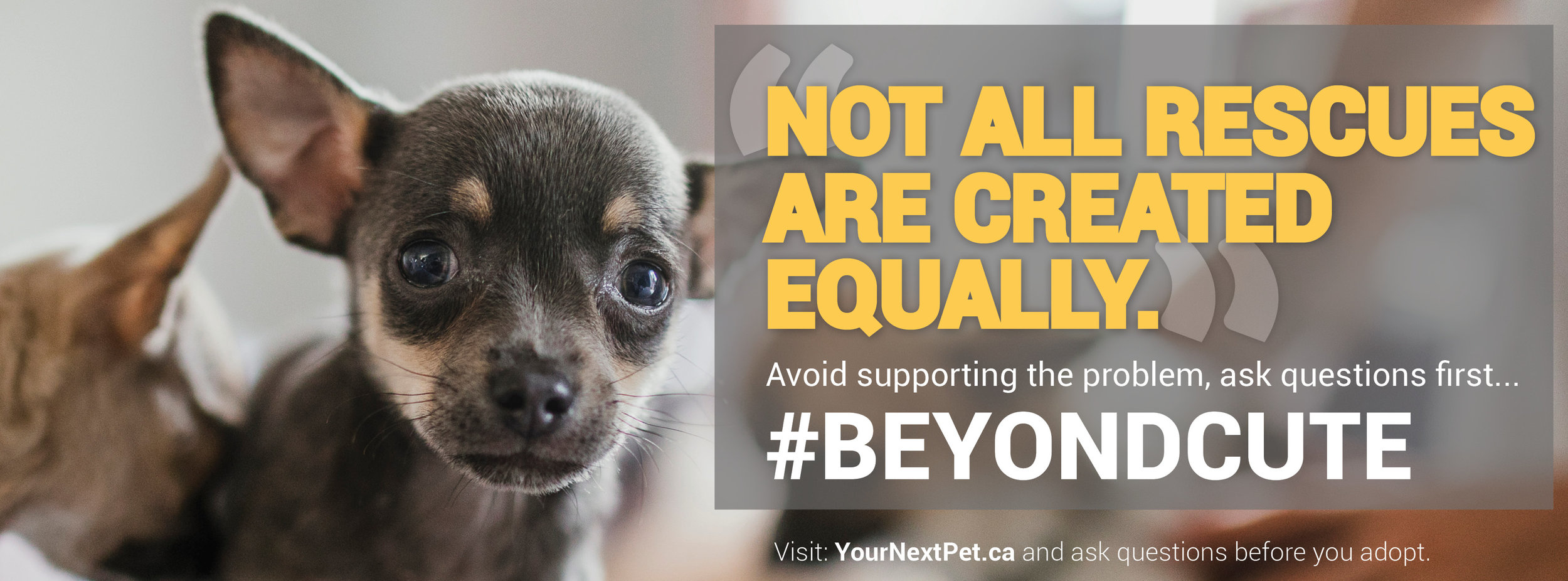 #BeyondCute - Facebook Banner - Not all rescues are created equally - BLOCKING FINAL DOG CHOICE 2019.jpg