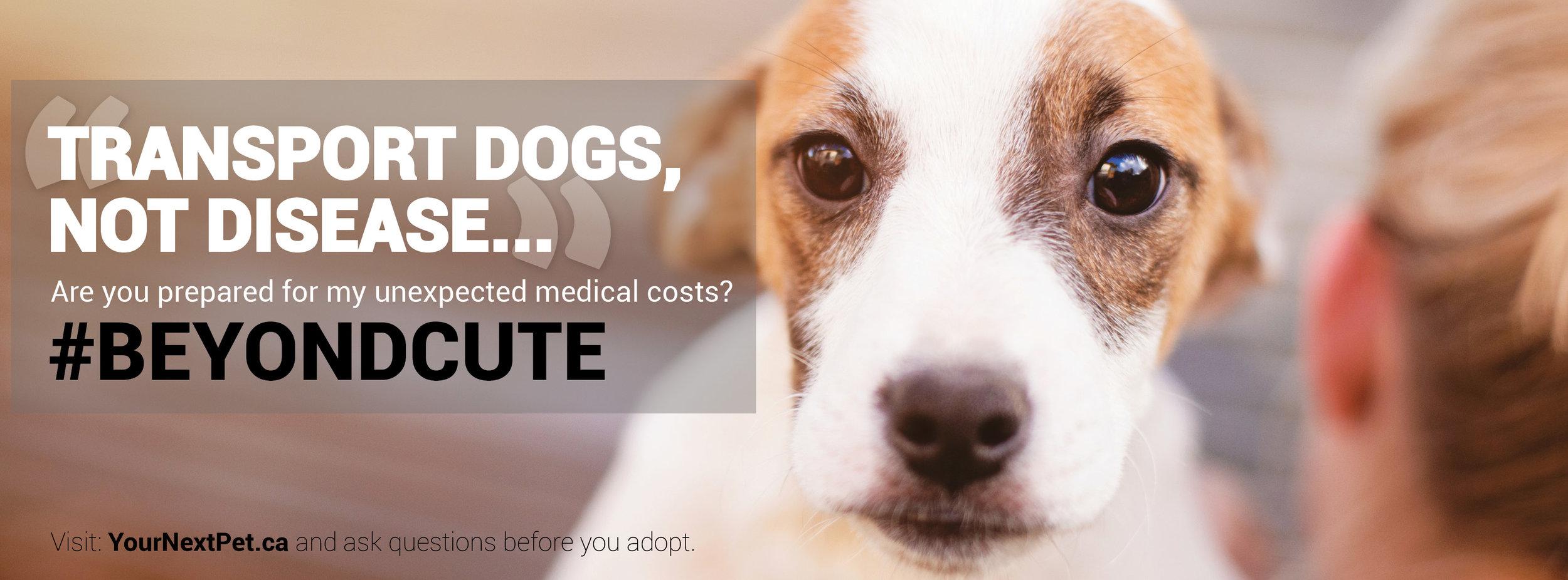 #BeyondCute Facebook Banner - BLOCKING Transport Dogs Not Disease - FINAL 2019.jpg