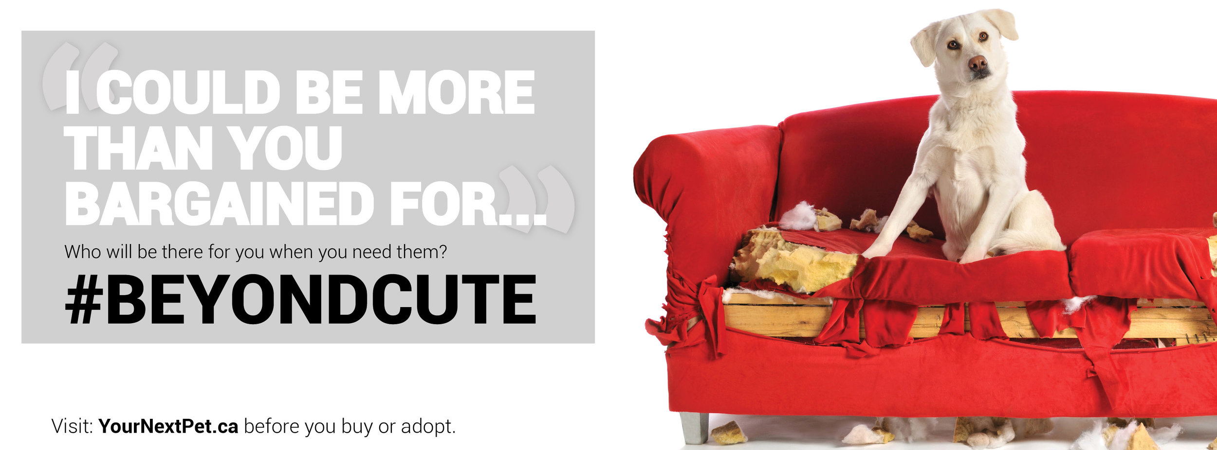#BeyondCute Facebook Banner - I could be more than you bargained for - BLOCKING 2019.jpg