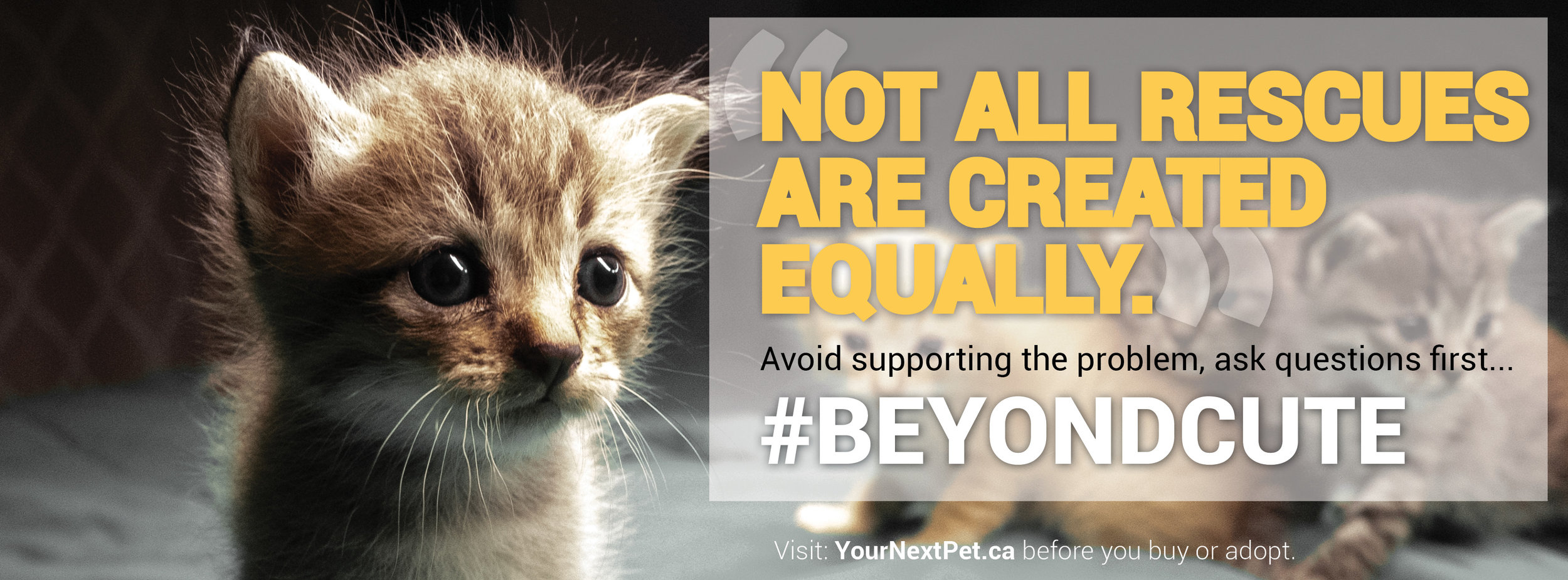 #BeyondCute - Facebook Banner - Not all rescues are created equally - BLOCKING CAT OPTION 2019.jpg