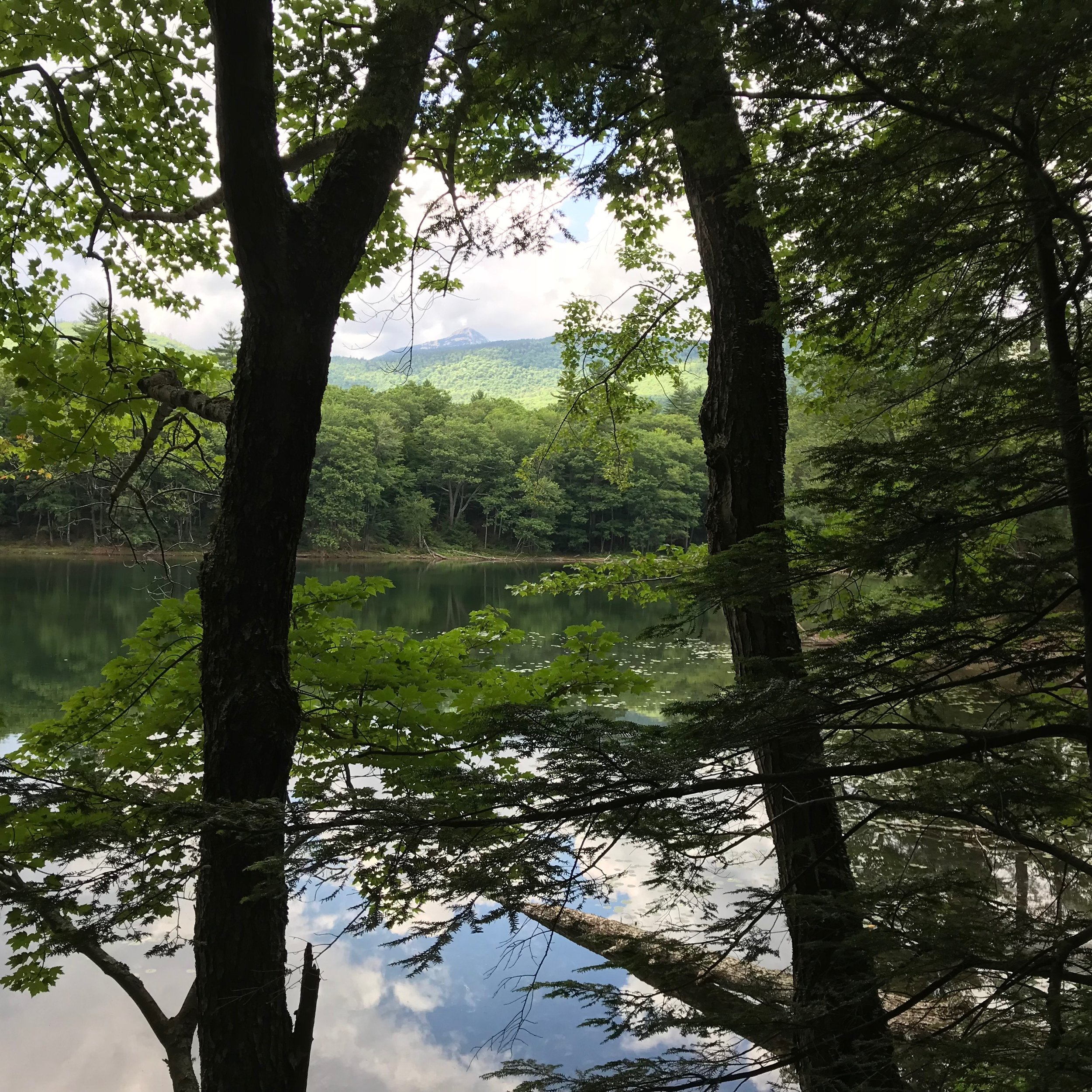 Mount Chocorua from Heron Pond