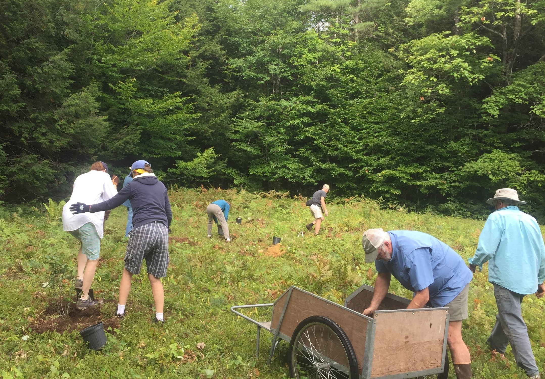 Mulching shrubs planted thanks to an NRCS grant. Photo: Lynne Flaccus