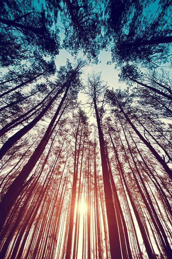 up trees.jpg