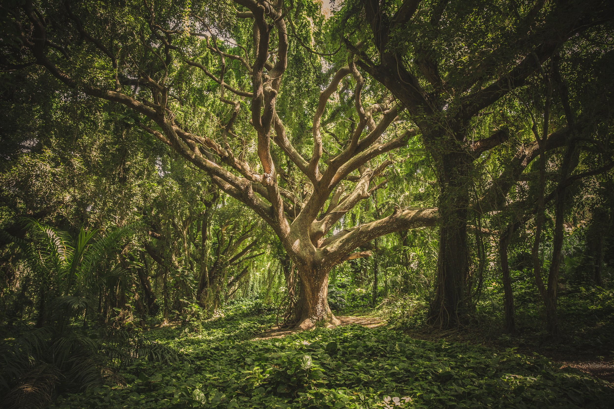 cool-wallpaper-forest-hawaii-38136.jpg