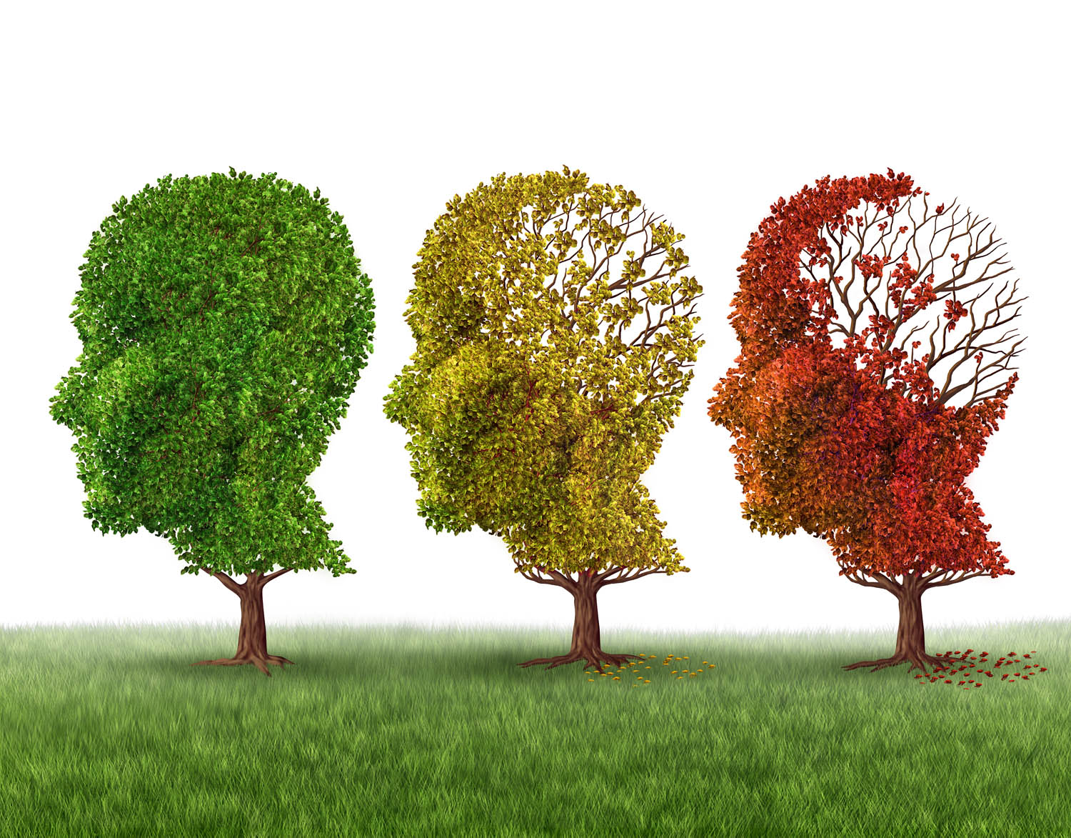 cognitive health - learn about dietary and lifestyle strategies to maximise cognitive health