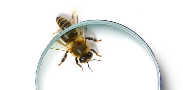 Bee-Magnify-small.jpg