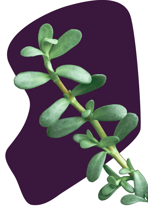 bacopa_knocked_out_crosshatch_grade_png8_v03.png