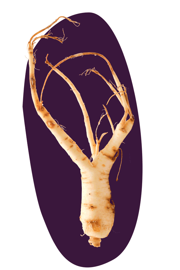 ginseng_knockout_crosshatch_grade_newsplat_png8_v02.png