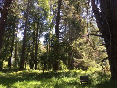 Trees Vedanta grove.jpg