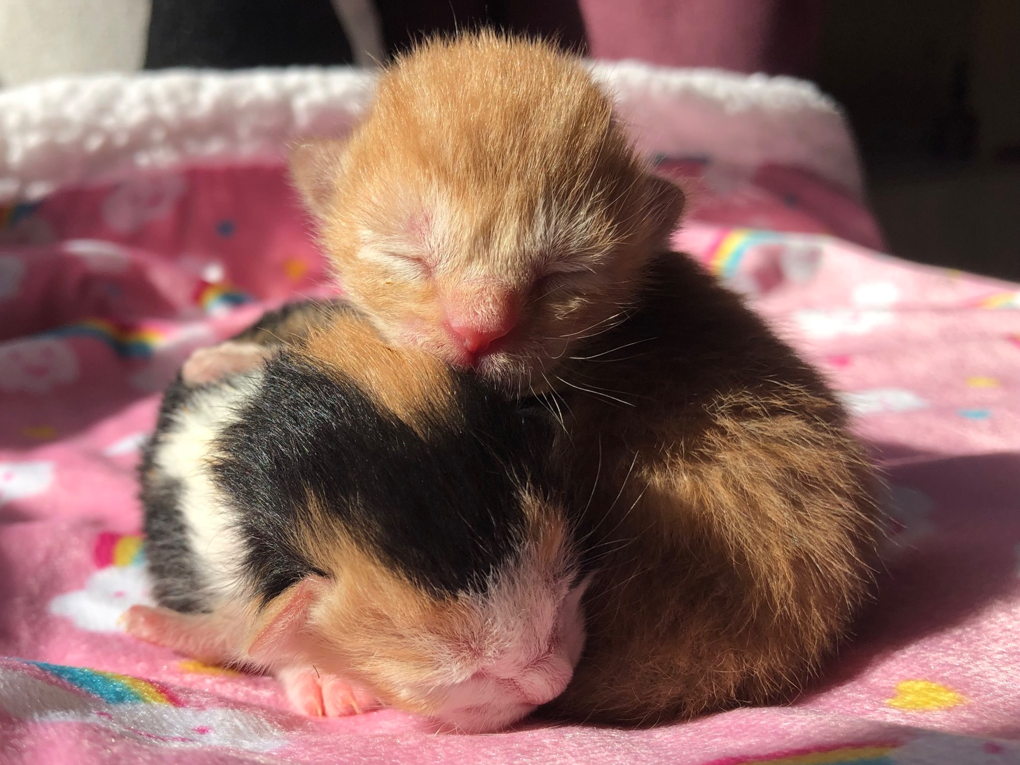 Prima and Nova - Renamed Cheddar and Biscuit