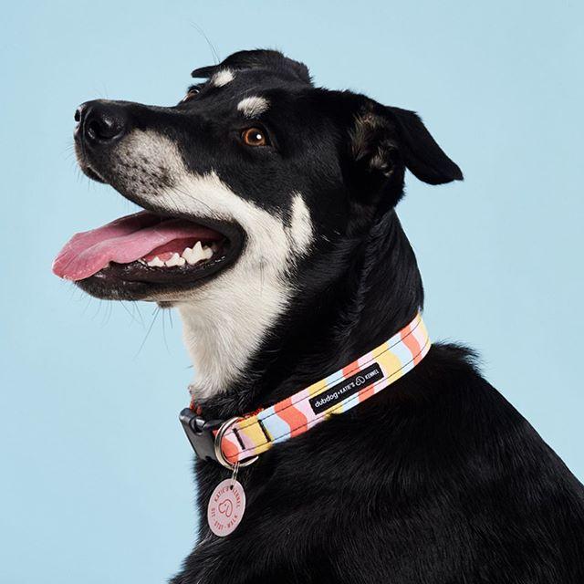 KK X @dubdogdesigns collars launch 8/26 🔥