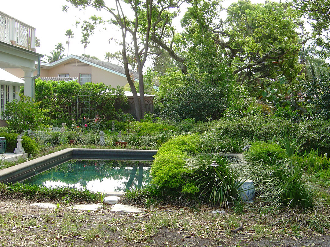 Before - overgrown plants and neglect make this pool unfriendly