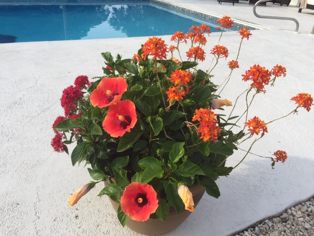 Pots and Containers - ① Enhance pools, courtyards, walkways, flower beds, and gathering spaces.② Seasonal color changes to enhance aesthetics and interiors