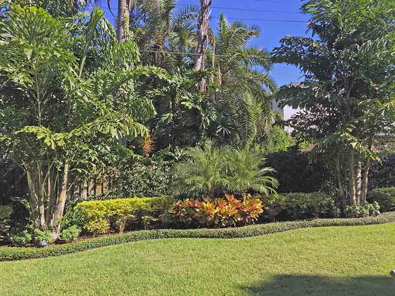 South Tampa - side yard with organic shaped landscape, varying palms and splashes of color