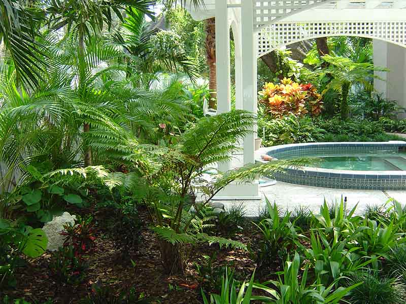 Harbor Oaks - tranquil and lush pool softscaping with ferns, lilies, and palms