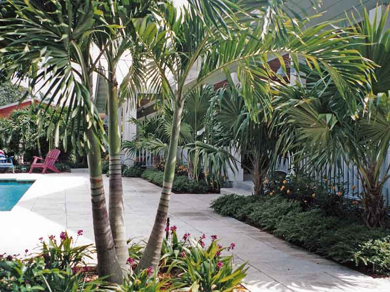 Wilton Manors - palms and tropical flowers warm the hardscaped outdoor living space