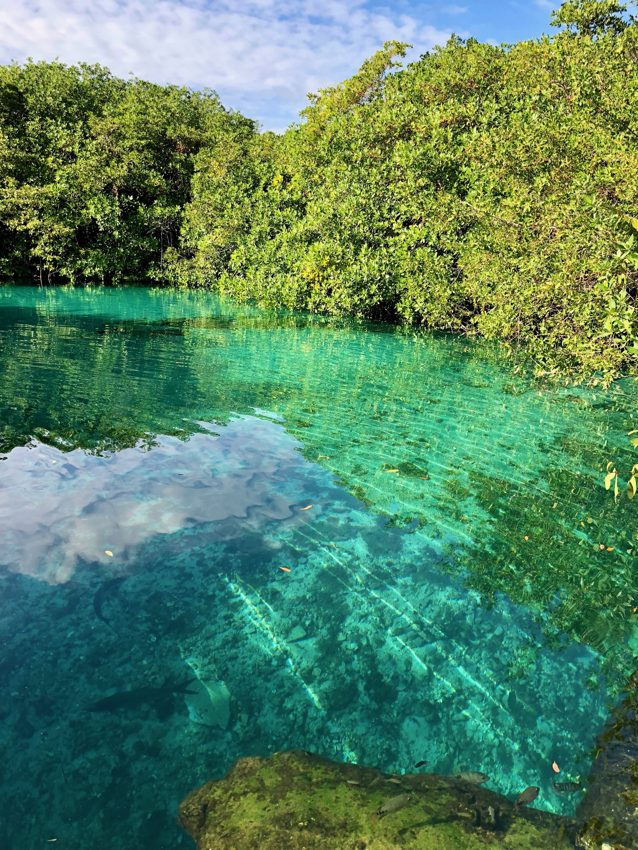 The translucent green of Casa Cenote.